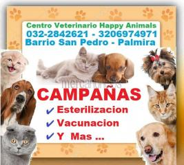 ⭐ veterinario palmira, veterinaria, happy animals, esterilizacion, vac