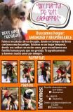 PERROS Y GATOS EN ADOPCION RESPONSABLE