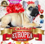 Bulldog Francés Calidad Europea Nietos Del Super Campeon Borman
