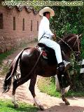 RanchoElChalanCusco.com We offer horses tour packages and horseback ri